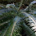Ferns and more ferns by PTMurphus