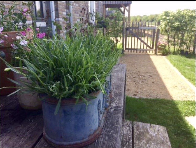 Planten op de tuintafel