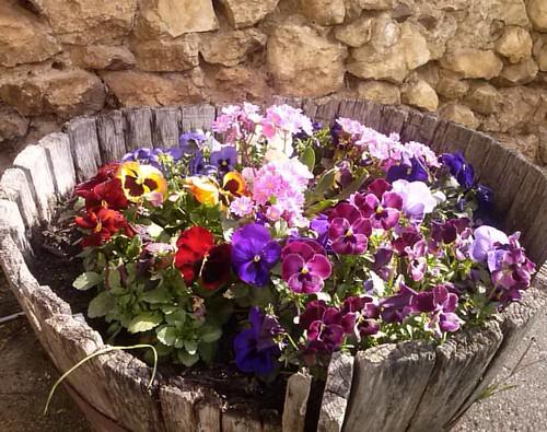 #fioripazzi #mammole #flowers #morrea #marsica #Abruzzo