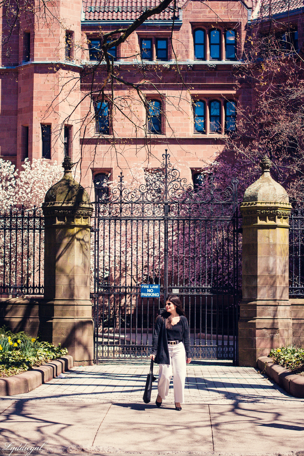 cherry blossoms at yale-3.jpg