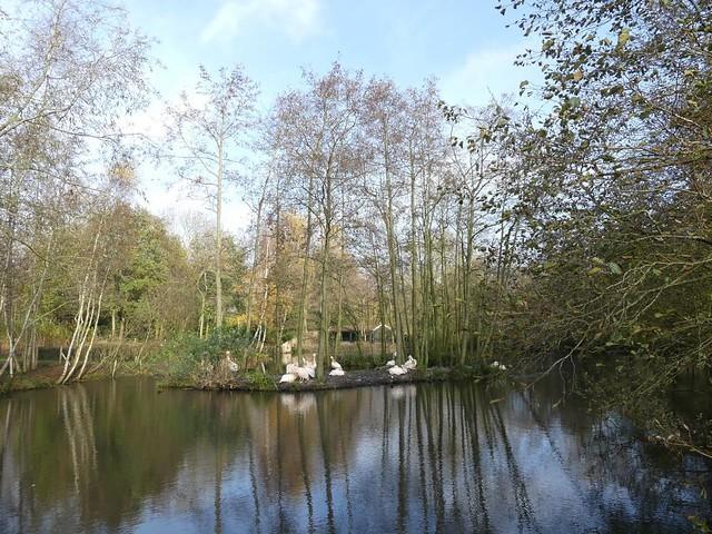Pelikananlage, AquaZoo Friesland