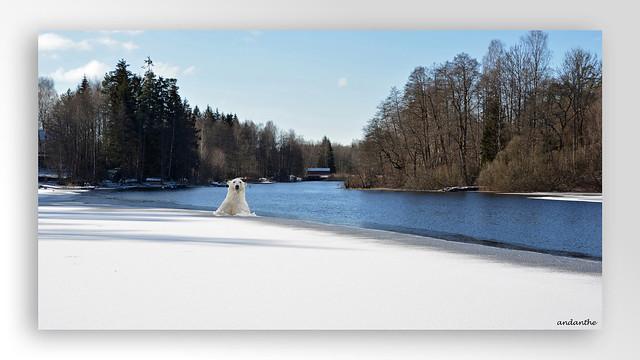 Along the river Mölndalsån (5)