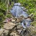 Puerto Rico: El Yunque National Forest