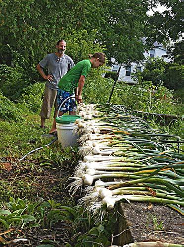 Wed, 03/28/2018 - 23:25 - Garlic Harvest