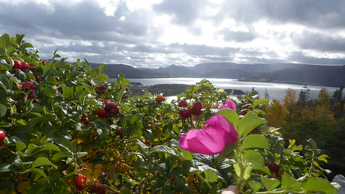 Bonne Bay hilltop