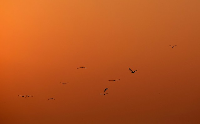 Birds..., Fujifilm X-T10, XC50-230mmF4.5-6.7 OIS II