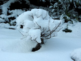 雪の朝2 八房下野