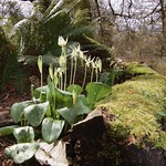 Flowers at Arboretum