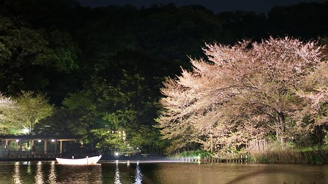 LRG_DSC07888三渓園観桜の夕べ