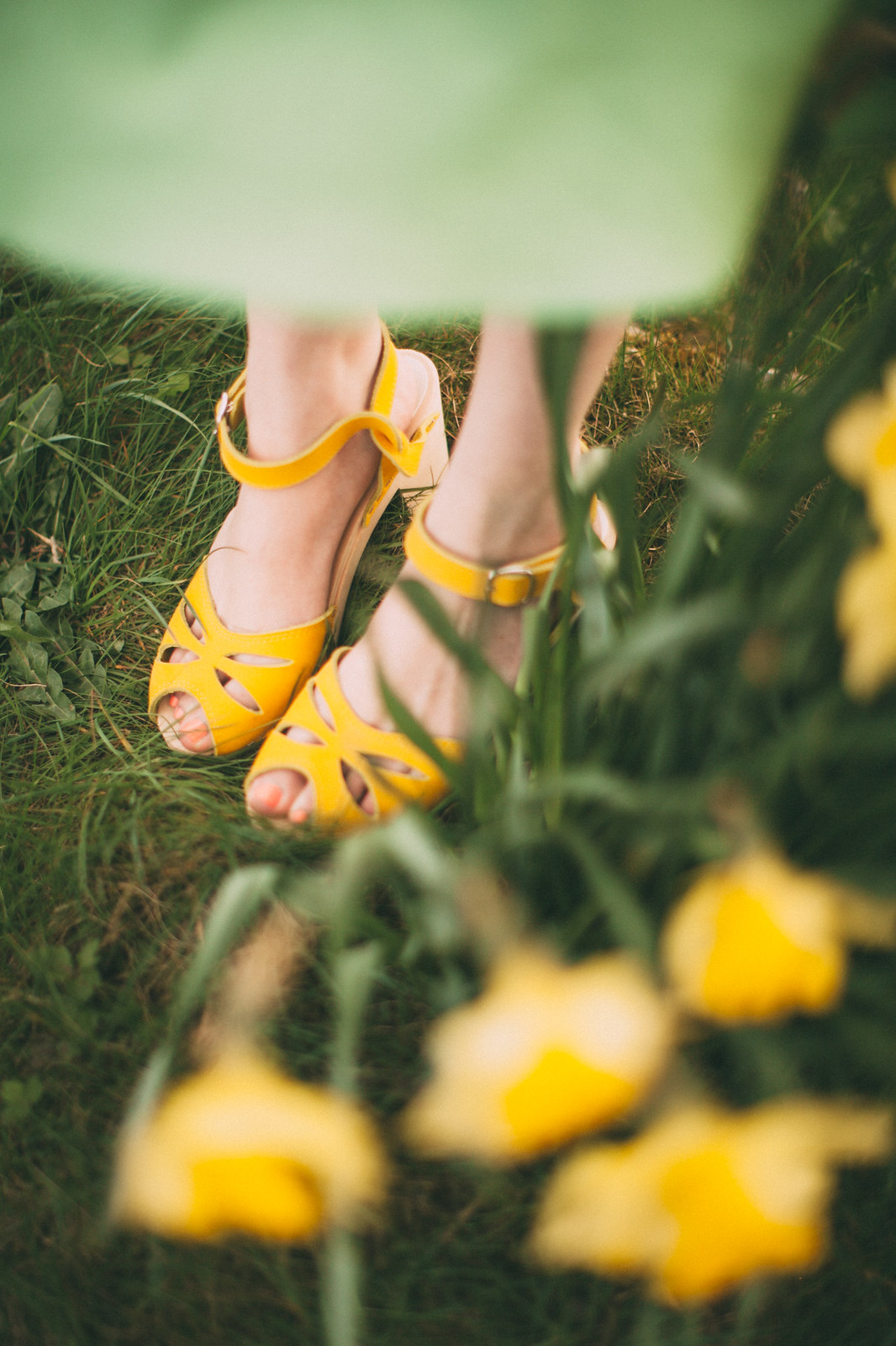 daffodil road-16