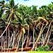 Sri Lanka, Westcoast Village