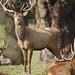 Red Deer Wollaton Park 5-3-18