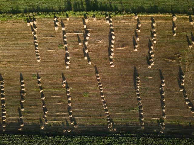 NT Drone - Church Lane Field-2