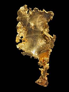California leaf gold Peabody Museum