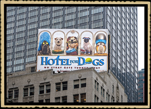 DSC_0136 Hotel for Dogs, Times Square or