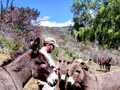 Donkey Town 作者 prairiegirrl