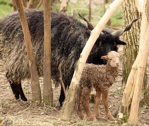 Fekete anyától és fekete apától