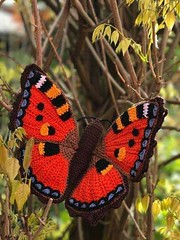 😍   as I am passionate about that butterfly model that crochet more elegant and delicate speaks serious than the most beautiful pattern I loved