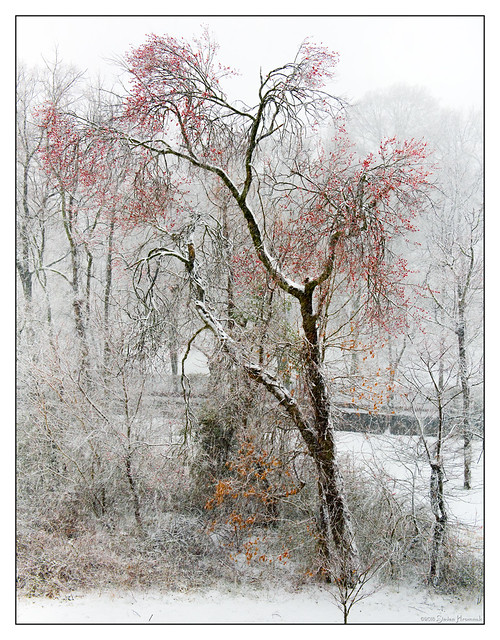 Cherry Tree and the Snow Storm