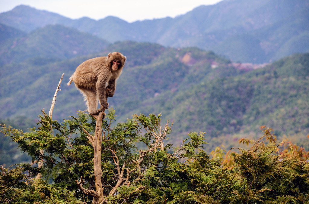 Monkey on top of tree and mountains