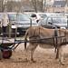 8 april Lentefair ezelboerderij