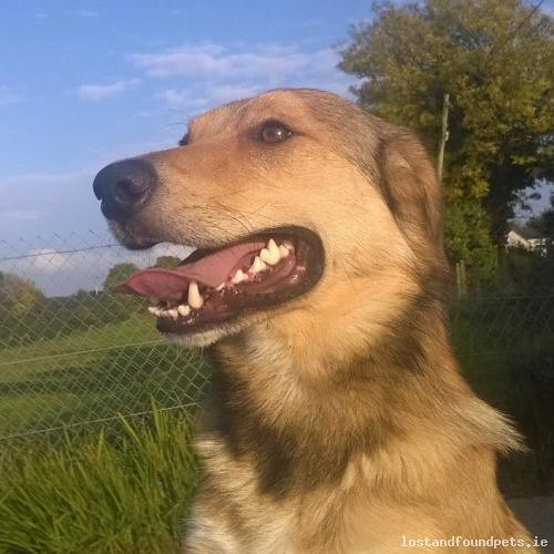 [Reunited] Wed, Mar 21st, 2018 Lost Male Dog - Upper Hills, Castlecomer, Kilkenny