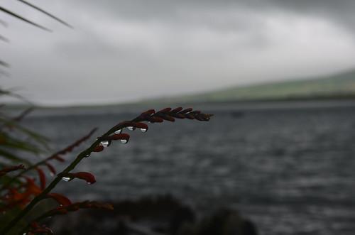 Blumenzweig mit hängenden Regentropfen
