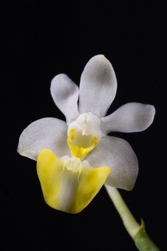Orchideen-Neuzugang 2 40950941852_f95009e699_c