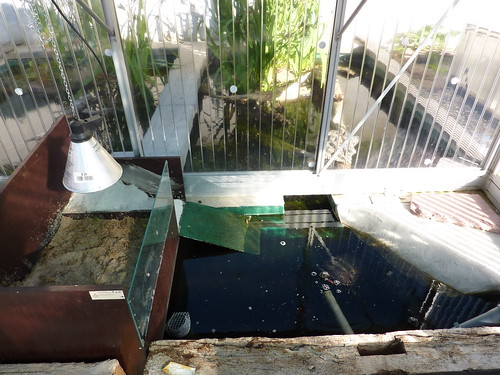 Amphibienhaus