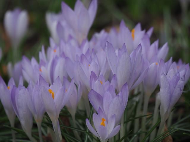 Sat, 2018-02-24 12:57 - Brooklyn Botanic Garden