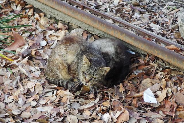 Today's Cat@2018-03-27