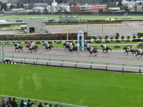 福島競馬場の3階一般席から眺めるレース