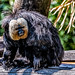 Audubon Zoo Revisit 3 by AaronP65 - Thnx for over 12 million views