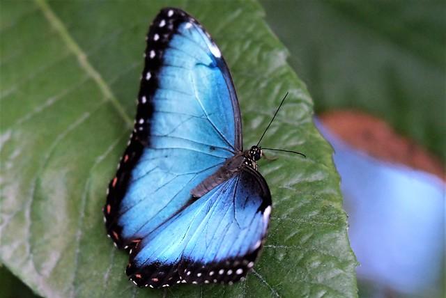Butterflies at the Gardens