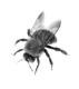 Pest Control Methuen MA