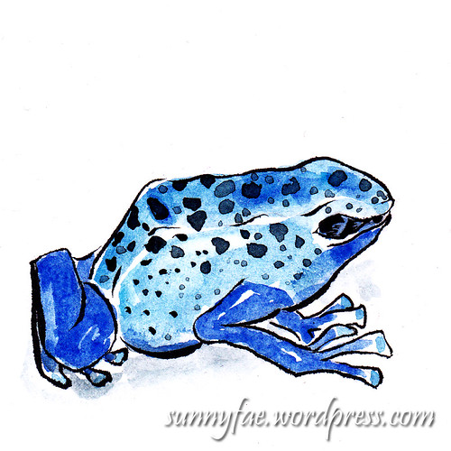 azure poison arrow frog