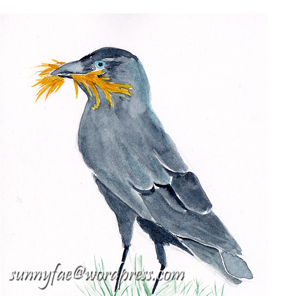 Jackdaw with a Moustache 2