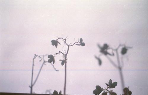 Autor: Lolita Storm