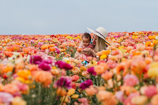 Carlsbad California flower fields