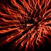 Fireworks XIV