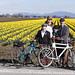 Dandy Daffodil Tweed Ride-2