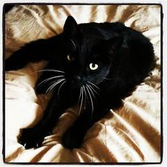 Klappvänlig katt spinner högt!