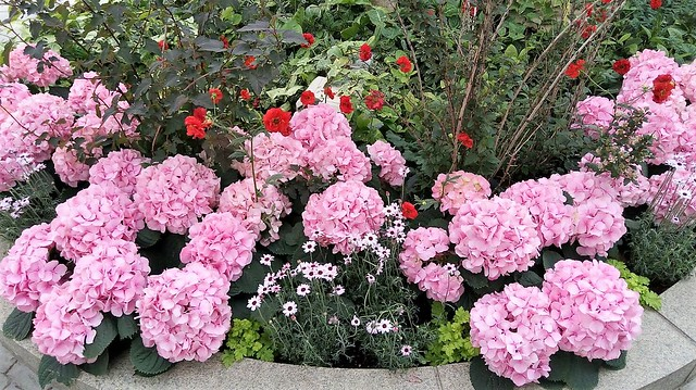 濱松花卉主題公園 (7)