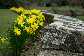 20180322-06_Coombe Abbey Country Park - - Daffodils