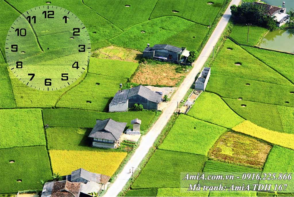 AmiA 167 - Tranh cánh đồng quê hương xanh mướt ở Việt Nam