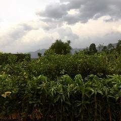 #nursery #wallforest #ishayogacentre #treesinthemaking #trees #forest