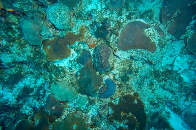 Nieuw koraalrif Sababank