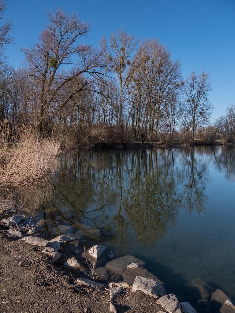 Au bord de l'étang... + recadrage 40818865192_f56b9e8860_b