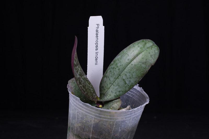 Orchideen-Neuzugang 2 40950928912_8fa1191a1e_c
