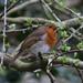 Birds on Cliveden Reach